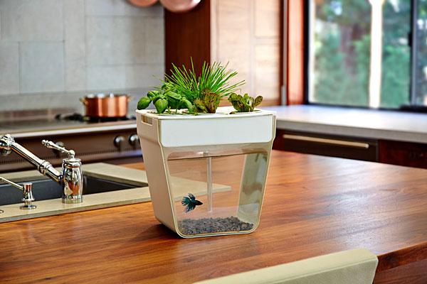Акваферма, аквариум с зеленью