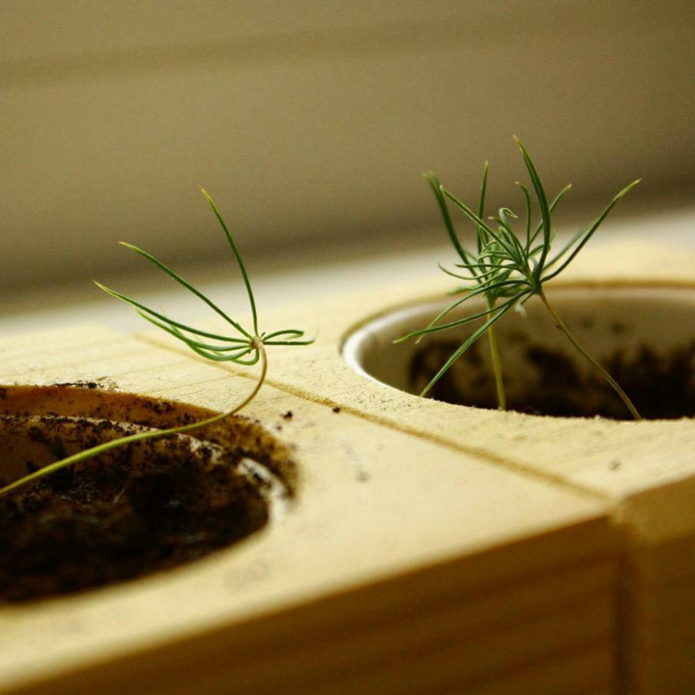 Экокуб - набор для выращивания